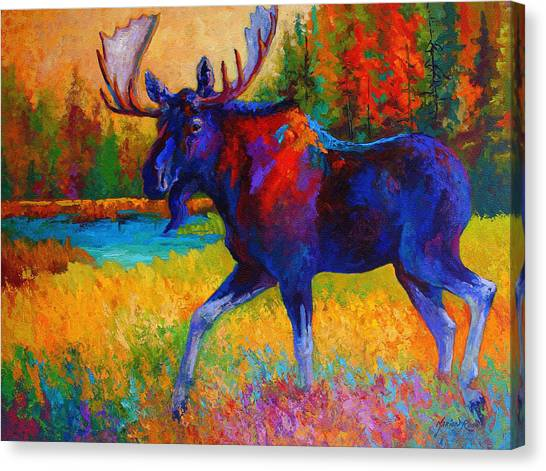 Bulls Canvas Print - Majestic Monarch - Moose by Marion Rose