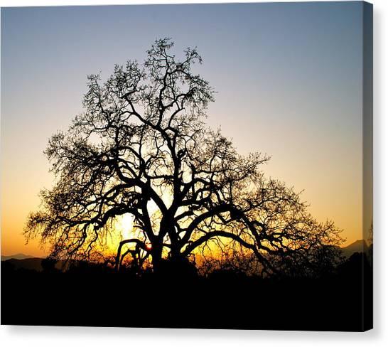 Majestic Oak Tree Sunset Canvas Print