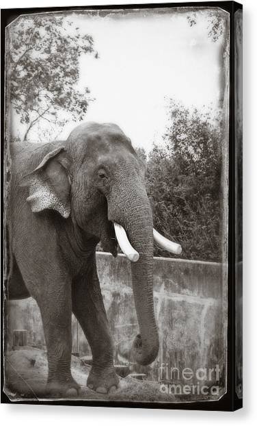 Canvas Print featuring the photograph Majestic by Sandy Adams