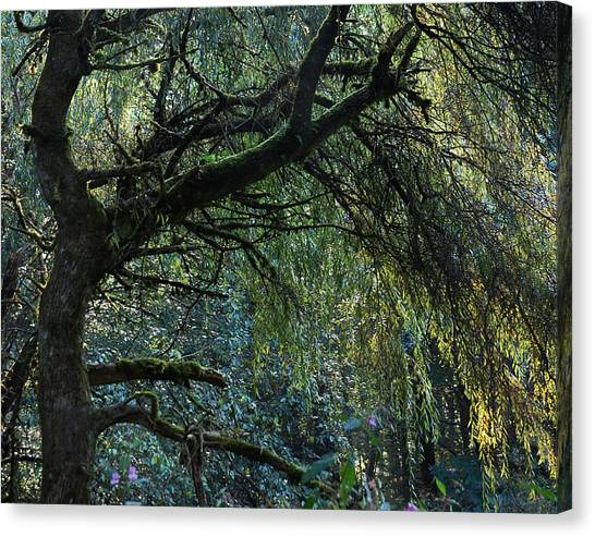 Weeping Willows Canvas Print - Majestic Weeping Willow by Marion McCristall