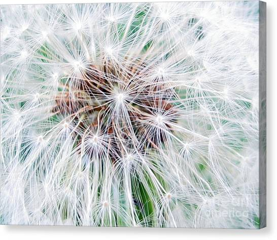 Make A Wish Canvas Print
