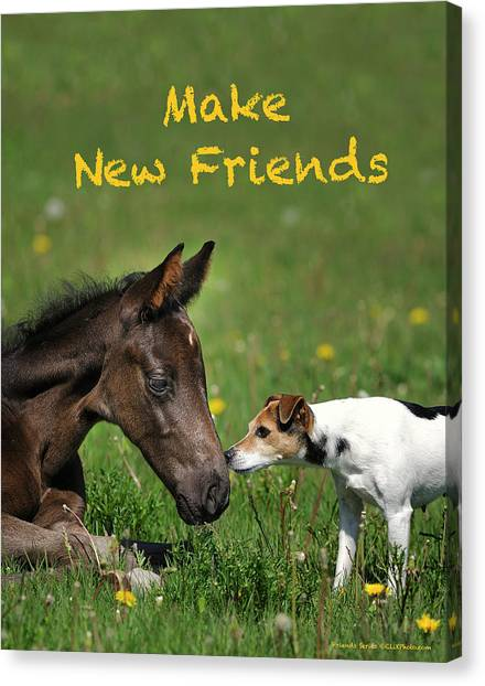 Canvas Print - Make New Friends by Shawn Hamilton
