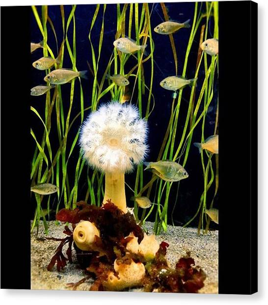 Aquariums Canvas Print - Makes A Cool Wallpaper #seattle by Joan McCool