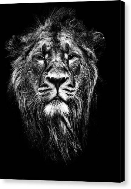 Male Asiatic Lion Canvas Print