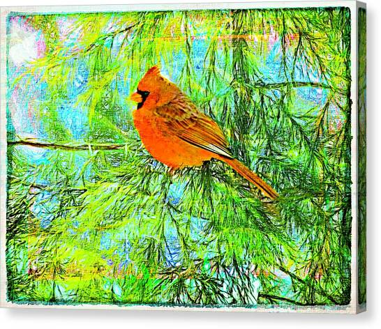 Male Cardinal In Juniper Tree Canvas Print