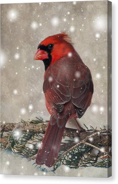 Male Cardinal In Snow #1 Canvas Print