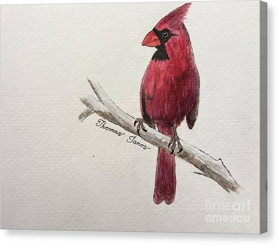Male Cardinal In Winter Canvas Print