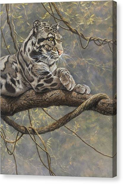 Canvas Print featuring the painting Male Clouded Leopard by Alan M Hunt