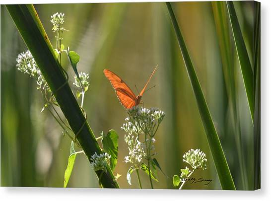 Male Julia Heliconia Butterfly Canvas Print