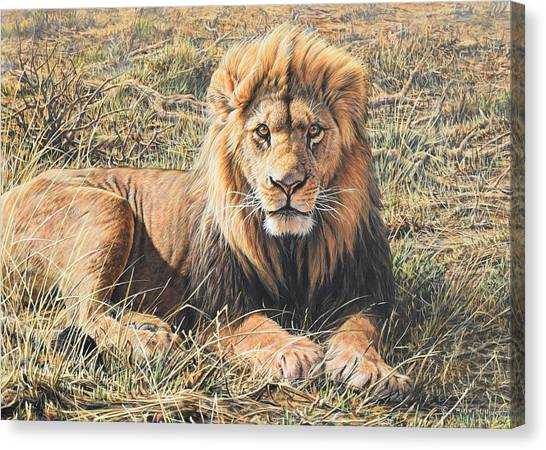Canvas Print featuring the painting Male Lion Portrait by Alan M Hunt