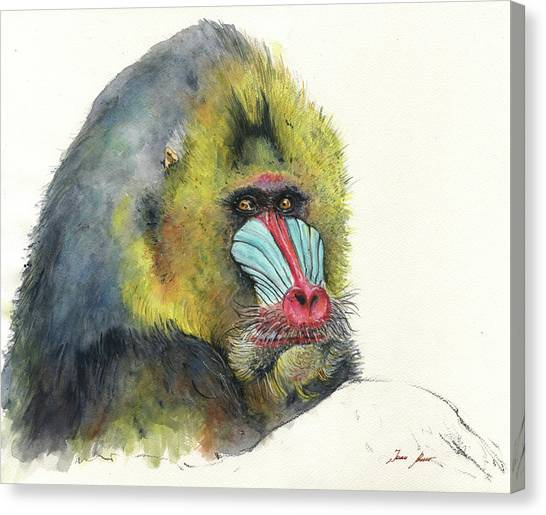 Apes Canvas Print - Male Mandrill by Juan Bosco