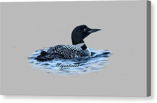 Male Mating Common Loon Canvas Print