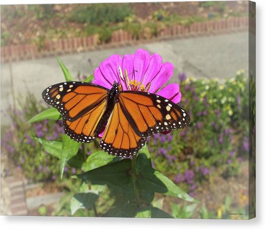 Male Monarch  Canvas Print