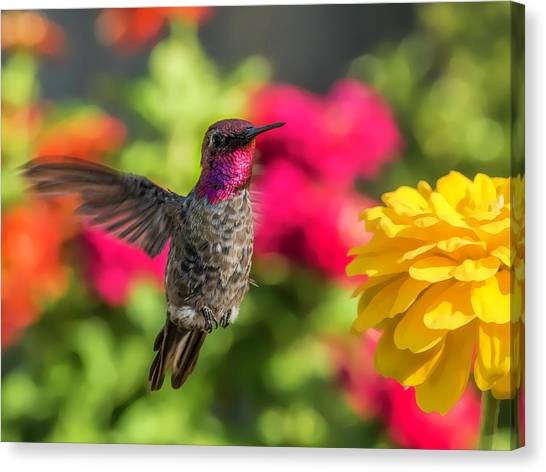 Mcherdering Canvas Print - Male Visitor by Mike Herdering