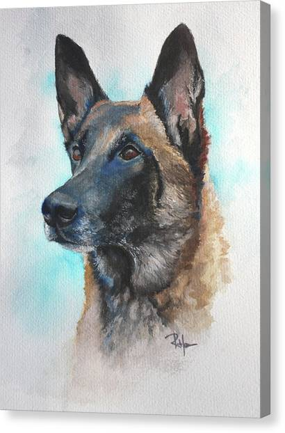 Malinois Canvas Print