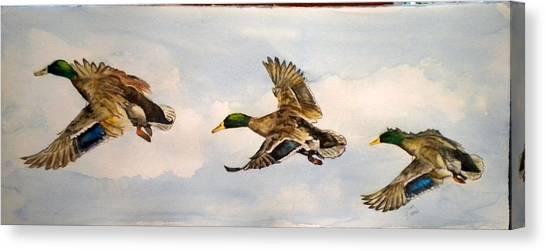 Mallard 3 In Flight Canvas Print