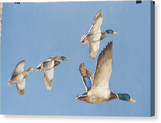 Mallards Number Five Canvas Print