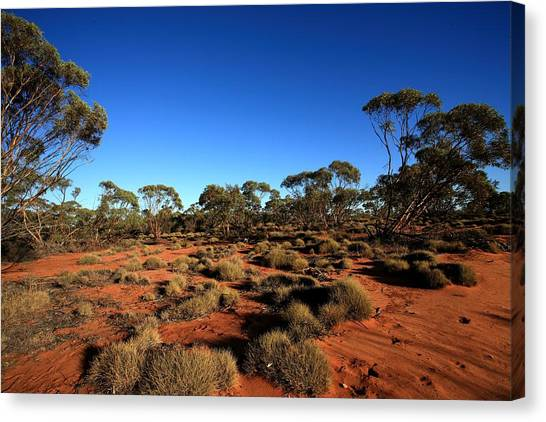Mallee And Spinifex Canvas Print by Tony Brown
