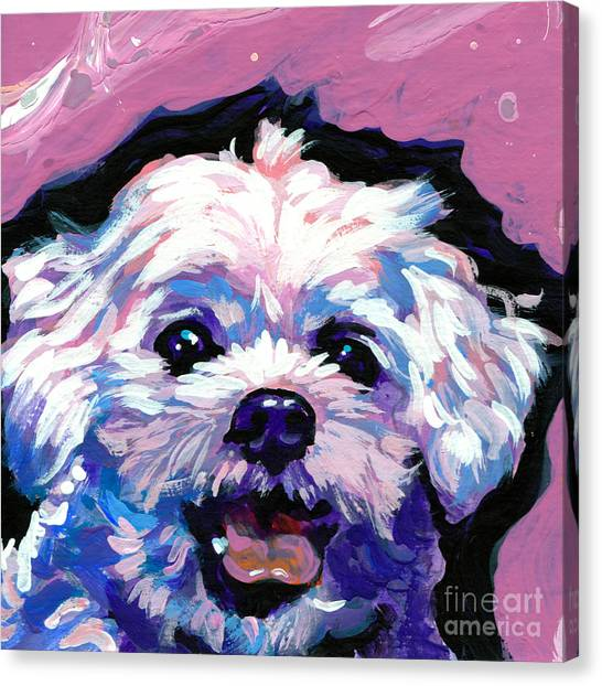 Shih Tzus Canvas Print - Malted Smiley Face by Lea S