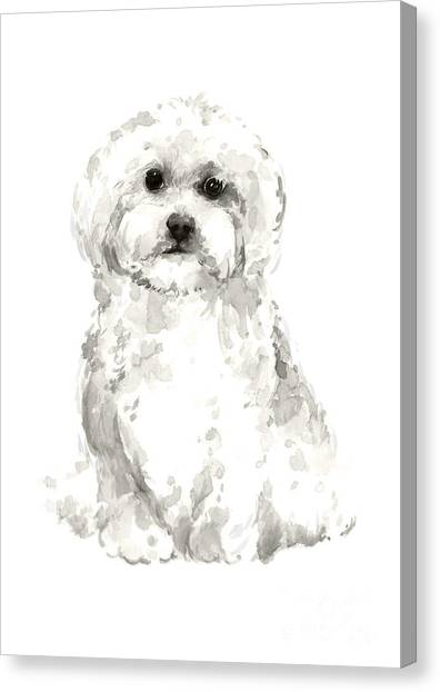 White Maltese Canvas Print - Maltese Abstract Dog Poster by Joanna Szmerdt
