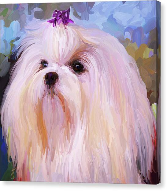 White Maltese Canvas Print - Maltese Portrait - Square by Jai Johnson