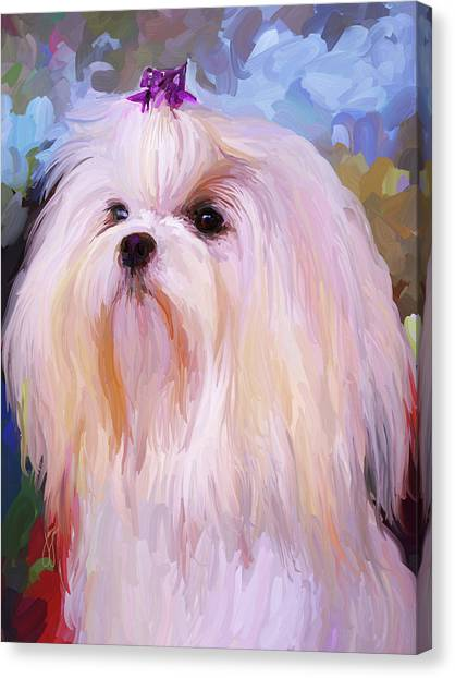 White Maltese Canvas Print - Maltese Portrait by Jai Johnson