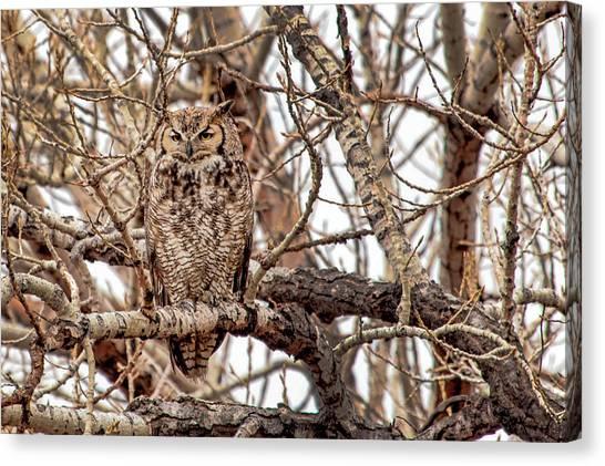 Mama Owl In Camo Canvas Print