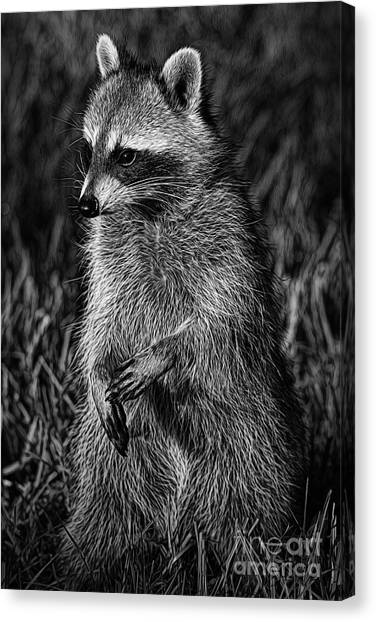 Mama Raccoon Canvas Print