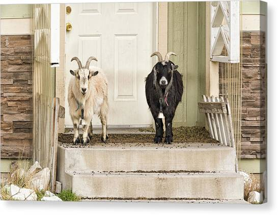 The Goat Guard Canvas Print