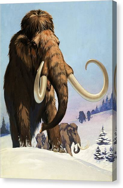 Tundras Canvas Print - Mammoths From The Ice Age by Angus McBride