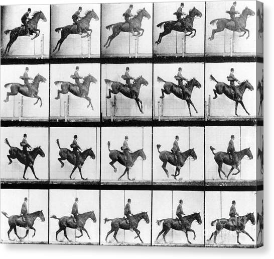 Horses Canvas Print - Man And Horse Jumping by Eadweard Muybridge