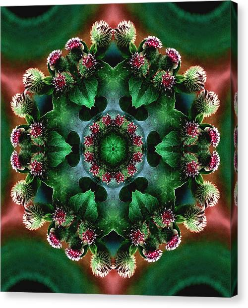 Mandala Bull Thistle Canvas Print
