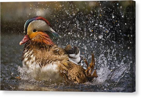 Ducks Canvas Print - Mandarin Duck by C.s.tjandra