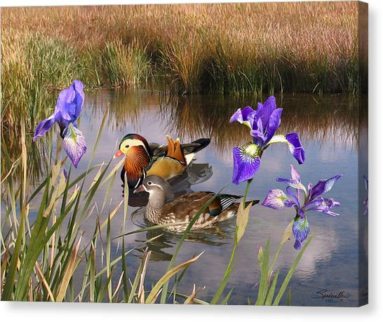 Mandarin Ducks And Wild Iris Canvas Print