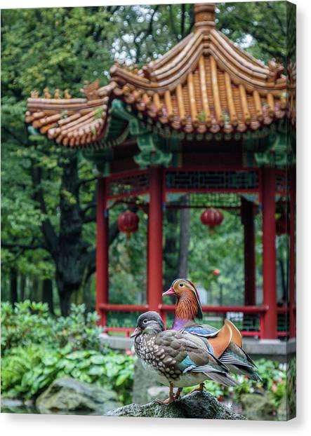 Mandarin Ducks At Pavilion Canvas Print