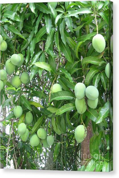 Mango Tree Canvas Print - Mango Tree. Home Collection by Oksana Semenchenko