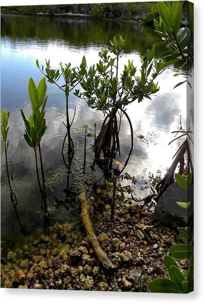 Mangrove 2 Canvas Print by Patricia Bigelow