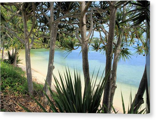 Mangrove Trees Canvas Print - Mangrove Bay Bermuda by DJ Florek