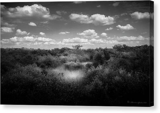 Seagrass Canvas Print - Mangrove Clearing by Marvin Spates