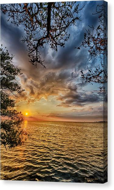 Mangrove Trees Canvas Print - Mangrove Embrace by Marvin Spates
