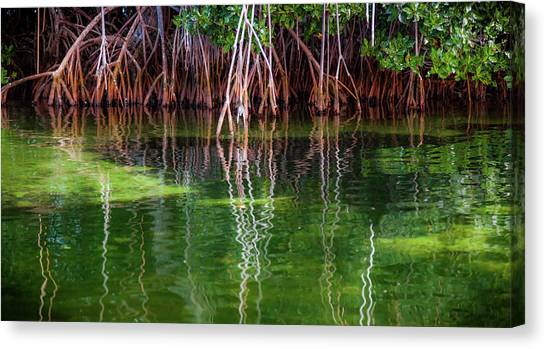 Mangrove Trees Canvas Print - Mangrove Reflections by Karen Wiles