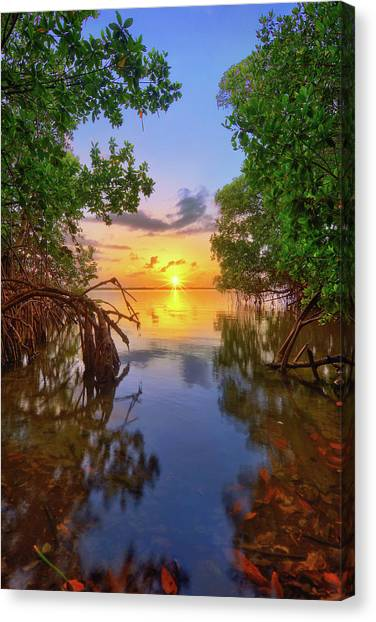 Mangrove Sunset From Jensen Beach Florida Canvas Print