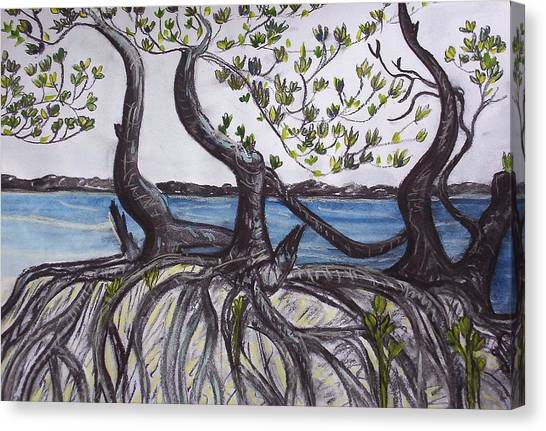 Canvas Print - Mangroves by Joan Stratton