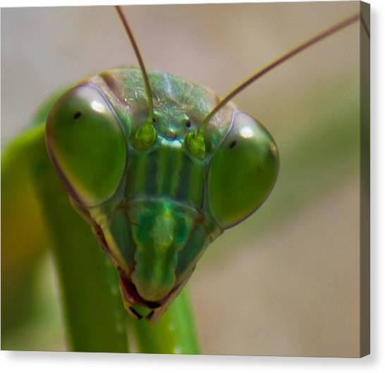 Mantis Face Canvas Print