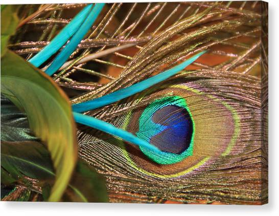 Many Feathers Canvas Print