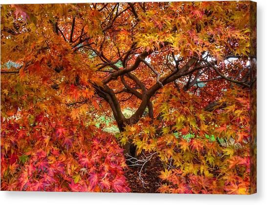 Maple Beauty Canvas Print