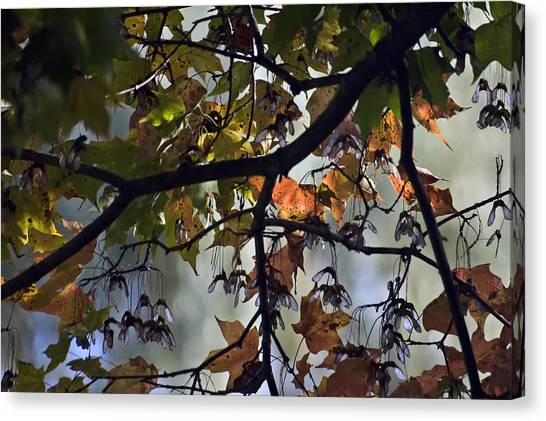 Maple Color Canvas Print by Ross Powell