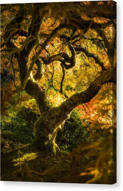 Maple Fairytale Canvas Print