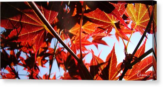 Maple Fire Canvas Print