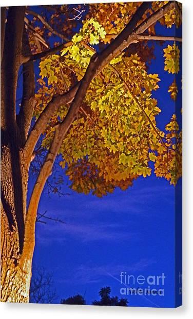 Violeta Canvas Print - Maple In The Night by Violeta Ianeva